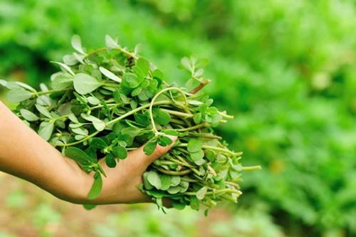 trị mụn cám bằng rau sam