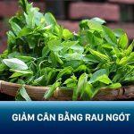 Bật mí 3 cách giảm cân bằng rau ngót đơn giản loại bỏ ngay 2 – 3kg